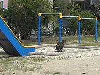 公園に猫_s