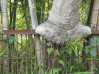 木のお化け