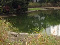 赤池 池殺生?