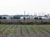 愛知県農業総合試験場