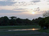 田んぼに映る夕日