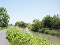山菜が採れる天白川