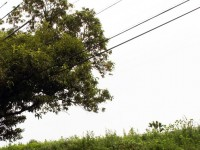 木の中を電線