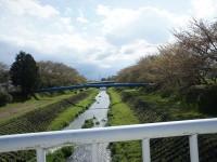 岩崎川の桜道