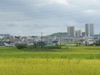 米野木駅を眺める