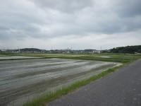 本郷町の田んぼ