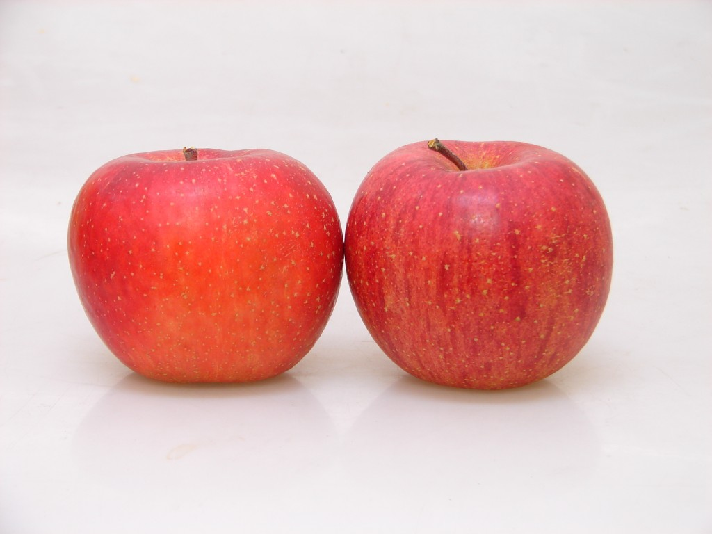 長野 減農薬・化学肥料不使用 こだわりりんご