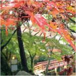 瀬戸の岩屋堂 紅葉も綺麗
