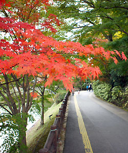 岡崎東公園の紅葉01