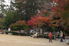 岡崎東公園 中央広場の紅葉