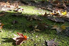 豊田市稲武 大井平公園 光の中の紅葉