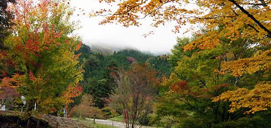 豊田市稲武の山々、茶臼山に続く道