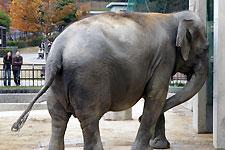 岡崎東動物園 ゾウのふじ子